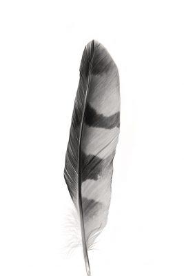 Feather_bw_wbg_03lr
