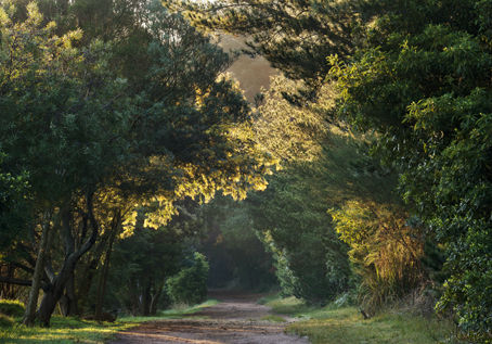 Red_Hill_Trail_2