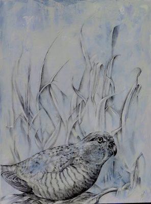 Cherie Leedon Western_ground_parrot